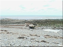 SN5066 : Remains of an old slipway near Plas Morfa by Eirian Evans