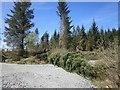 NR8788 : Road blocked by fallen tree by Patrick Mackie