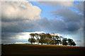 SK1561 : A stand of trees near Newhaven by David Lally