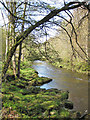SE0755 : The River Wharfe, upstream view by Pauline E