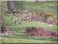 SU2308 : Deer sanctuary, Bolderwood Lodge by David Martin