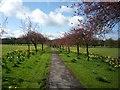 SE3054 : Cherry Tree Walk by DS Pugh