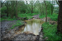TM1583 : Shimpling Ford by John Walton