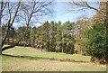 TQ4334 : Royal Ashdown Forest Golf Course by N Chadwick