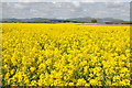 SO8645 : Malvern Hills and oilseed rape fields by Philip Halling