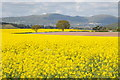 SO8645 : Great Malvern and oilseed rape fields by Philip Halling