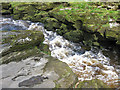 SE0656 : River Wharfe being forced through The Strid by Pauline E