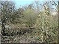 SE1425 : Disused railway at Bailiff Bridge by Humphrey Bolton