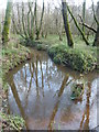 SU9318 : Wet ground (part of the Rother and its tributaries) west of Lavington Common by Peter H Jones