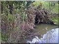 SK4683 : Pigeon Bridge Brook - Pithouse West by Karl Smt