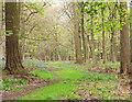 NZ1223 : Woodland ride with bluebells by Trevor Littlewood