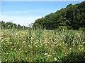 NT5682 : Wetland, Balgone Heughs by Richard Webb