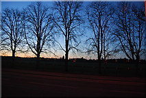 SU8652 : Trees at twilight, Queen's Avenue by N Chadwick