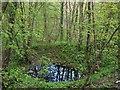 NZ1162 : Pond in bell-pit near Stanleyburn Bridge by Andrew Curtis