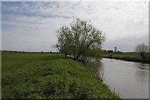 SU2598 : Tree by the river by Bill Nicholls