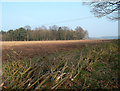 SU6886 : A Rather Thin Hedge by Des Blenkinsopp