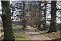 TQ5454 : Duchess Walk, Knole Park by N Chadwick