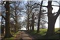 TQ5354 : Duchess Walk, Knole Park by N Chadwick