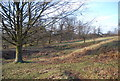 TQ5354 : Knole Park by N Chadwick
