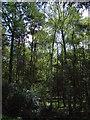 SK8555 : Stapleford Wood by JThomas