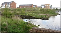 NS5068 : Shoreline, Yoker by Richard Webb