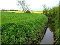 ST6796 : Lowland stream by Jonathan Billinger