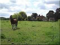SU7431 : Meadow, Empshott Green by Colin Smith