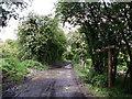 TQ3453 : Byway to Paddock Barn by David Anstiss