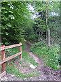 TL0118 : Bridleway through Landpark Woods by Philip Jeffrey