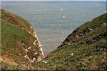 TA1974 : Bempton Cliffs by Graham Hogg