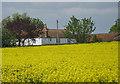SE7578 : Oilseed rape crop near White House Farm by Pauline E