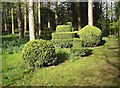 NZ4408 : Topiary work and budding bluebells by Stanley Howe