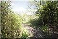 TQ0247 : Muddy path by Bill Nicholls