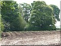 SJ7872 : Emerging crop above the Peover Eye valley by Christine Johnstone