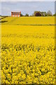 SO8545 : Oilseed rape and a farmhouse by Philip Halling