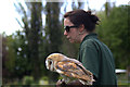 TF4323 : Barn Owl with Handler, Long Sutton Falconry Centre, Lincolnshire by Christine Matthews