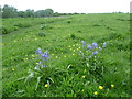 TQ2867 : Bluebells on Mill Hill, Mitcham Common by Marathon