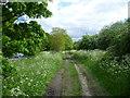TQ2968 : Path on Mitcham Common alongside Windmill Road by Marathon