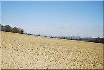 TQ1328 : A fallow field near Itchingfield by N Chadwick