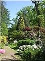 TQ9457 : Yew Tree and Azaleas - Doddington Place Gardens by Paul Gillett