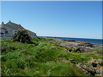 NX1896 : Ainslie Manor Shore by Billy McCrorie