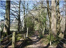 TQ1328 : West Sussex Literary Trail, Bashurst Copse by N Chadwick