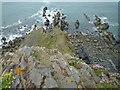 SS1914 : Higher Sharpnose Point by Maurice D Budden