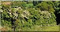 J2660 : Hawthorn blossom, Ravernet near Lisburn by Albert Bridge