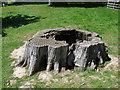 SU9722 : Petworth Park: tree stump by Stephen Craven