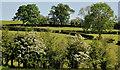 J2761 : Fields and trees, Ravernet near Lisburn by Albert Bridge