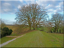 SU1070 : Avebury - Trees by Chris Talbot