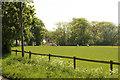SK7842 : Flawborough pasture by Richard Croft