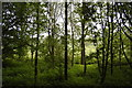 TL8314 : River Blackwater water meadow through the trees by John Myers