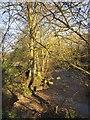 SE2159 : Trees by the Nidd by Derek Harper